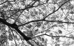 剪影树 免版税库存照片