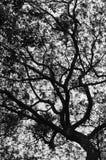 剪影树 免版税库存图片