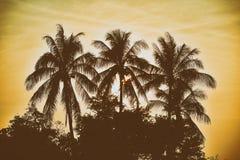 剪影棕榈树有葡萄酒过滤器背景 免版税库存图片