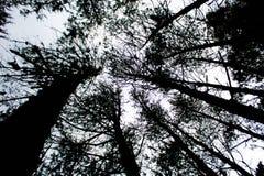 剪影森林 库存图片