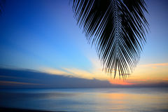 剪影椰子叶子 免版税库存照片