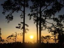 剪影概念,等待许多的人看与杉木的日落 图库摄影