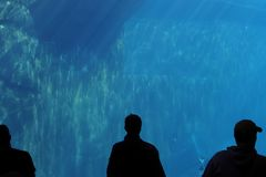 剪影水族馆在动物园里在纽伦堡在巴伐利亚 免版税库存图片