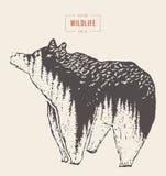 剪影狂放的熊森林野生生物得出的传染媒介 免版税图库摄影