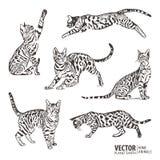 剪影猫样式背景 在许多位置的猫运动 也corel凹道例证向量 免版税库存照片