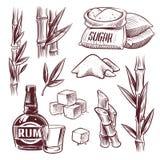 剪影甘蔗 甘蔗甜叶子、制糖厂茎、兰姆酒饮料玻璃和瓶 手拉糖的制造业 向量例证