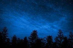 剪影的森林与满天星斗的天空,这个图象ar的元素 免版税库存图片