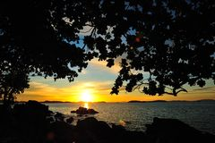 剪影结构树和日落 库存图片