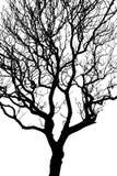 剪影结构树 库存图片
