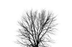 剪影结构树 免版税图库摄影