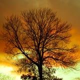 剪影结构树 免版税库存图片