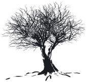 剪影结构树 图库摄影