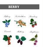 剪影集合的莓果汇集 向量 免版税库存图片