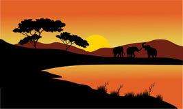剪影风景大象  库存照片