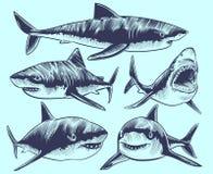剪影鲨鱼 与开放嘴的游泳的鲨鱼 水下的动物传染媒介纹身花刺收藏 向量例证