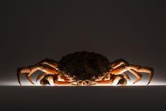 剪影,欧洲蜘蛛蟹,秘密行动,奥秘,黑暗, suspic 免版税库存照片