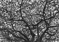 剪影黑白树 库存照片
