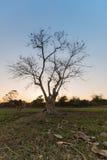 剪影轻的树 库存照片