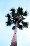 剪影plam结构树 免版税图库摄影