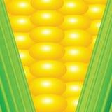 剪报玉米查出的路径 库存图片