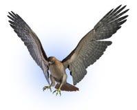 剪报鹰包括被盯梢的路径红色 向量例证