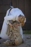 剪的绵羊vi 库存图片