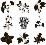 剪贴美术,在白色背景的黑对象 银杏树,伏牛花,稠李,三叶草,竹子,牵牛花的分支 免版税图库摄影