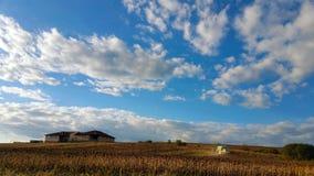 割在向日葵领域的联合收割机,反对与白色云彩的蓝天 免版税库存照片