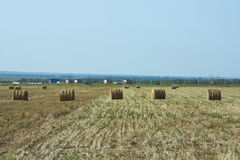 割晒牧草的农业劳动 图库摄影