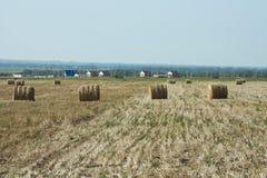 割晒牧草的农业劳动 库存照片