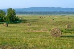 割晒牧草,收获在领域和小山 免版税库存照片