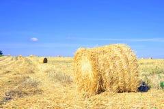 割晒牧草,收获在领域 库存图片