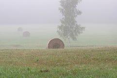 割晒牧草 库存图片