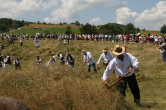 割的草在有大镰刀的山草甸 免版税库存照片