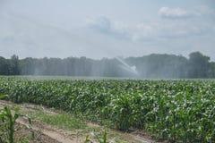 水力操作的拖拉机被浇灌的新鲜的生长白色玉米 免版税图库摄影