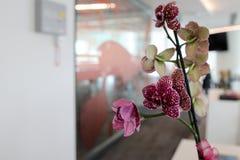 办公室和兰花 免版税图库摄影