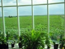 办公室和领域的窗口 免版税库存图片
