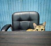 办公室猫 免版税库存照片