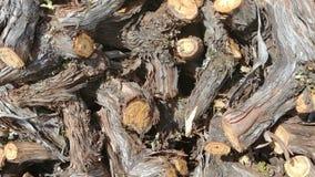 加伯奈葡萄酒葡萄树冠上纳帕谷 库存图片