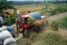 加入TPP合作的印度尼西亚 库存图片