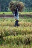 加入TPP合作的印度尼西亚 免版税图库摄影