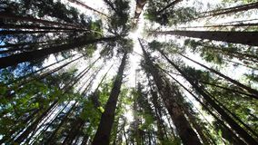 加冠林木 股票视频