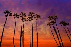 加利福尼亚与五颜六色的天空的棕榈树日落 库存图片