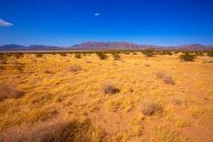 加利福尼亚丝兰谷的莫哈维族沙漠 库存图片