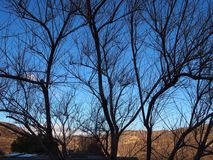 加利福尼亚冬天树b 图库摄影