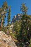 加利福尼亚国家公园美国加州红杉美&# 免版税图库摄影