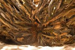 加利福尼亚国家公园美国加州红杉美&# 库存照片