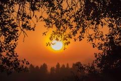 加利福尼亚在日出的橡木分支 免版税库存图片