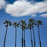 加利福尼亚在蓝天的棕榈树 免版税库存图片