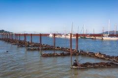 加利福尼亚密封负担Astoria ` s船坞 库存图片